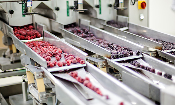 Frozen berries on a sorting machine.