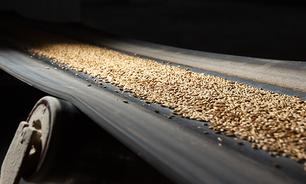 Seeds on a conveyor belt.